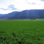 Okanagan Valley farm/ranch appraisal